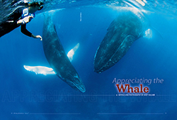 appreciating the whale pdf